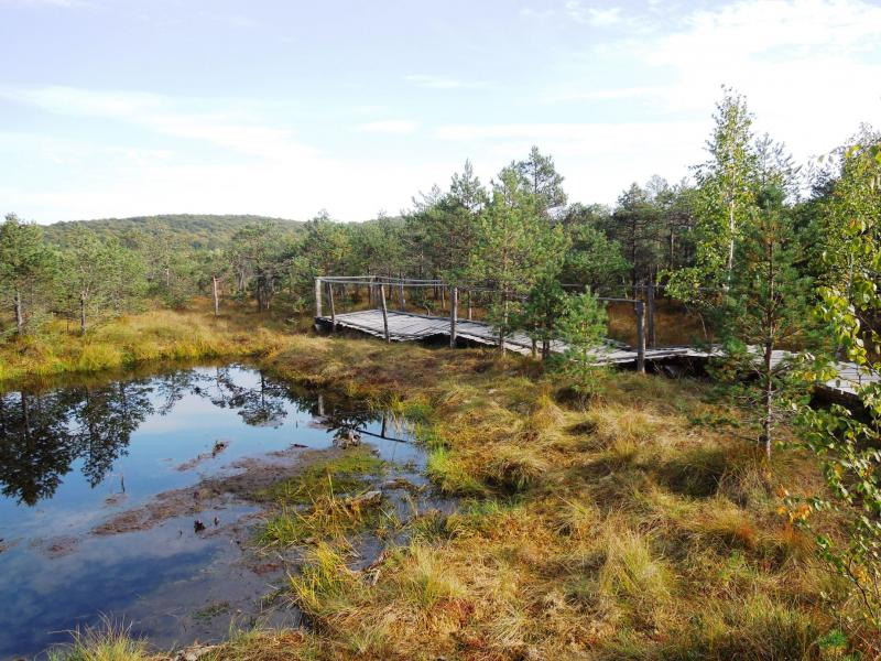 Lacul Cu Muschi Sau Tinovul Mohos