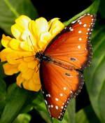 5 Iunie Ziua Mondiala A Mediului (ecologiei)